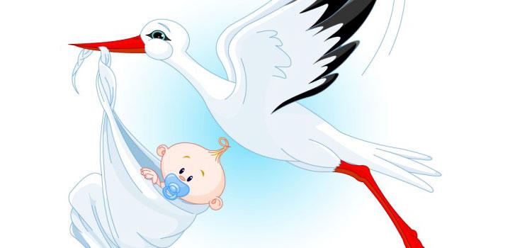 ciguena-bebe-vectores.jpg
