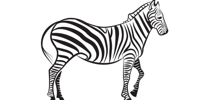 Zebra vectores gratis