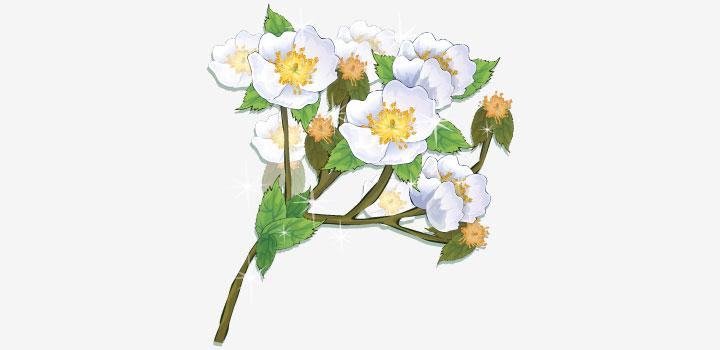 Ramo flores vectores gratis