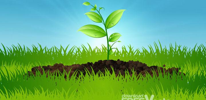 Planta vectores gratis