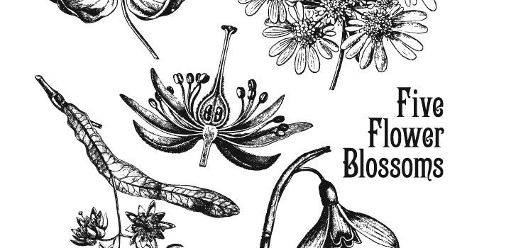 Flores Vintage Vectores Gratis