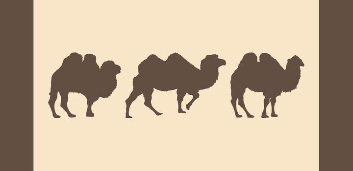 Siluetas camellos vectores gratis